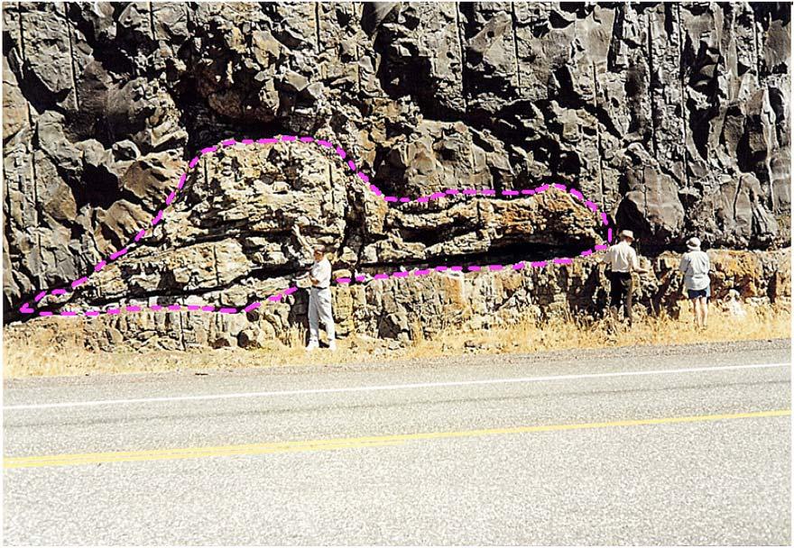 Figura 11 – Tronco de árvore fossilizada, entre dois derrames basálticos – GRC – Hwy-14 – margem direita do Rio Colúmbia, Washington (EUA). Notar corte transversal do tronco